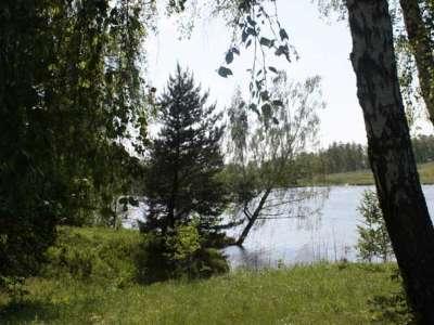 Посёлок Южные озёра, Лес: Лес по границе участка